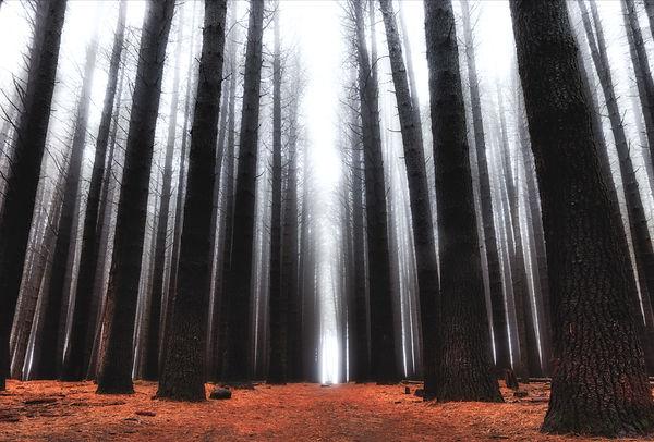 Mystery forest.jpg