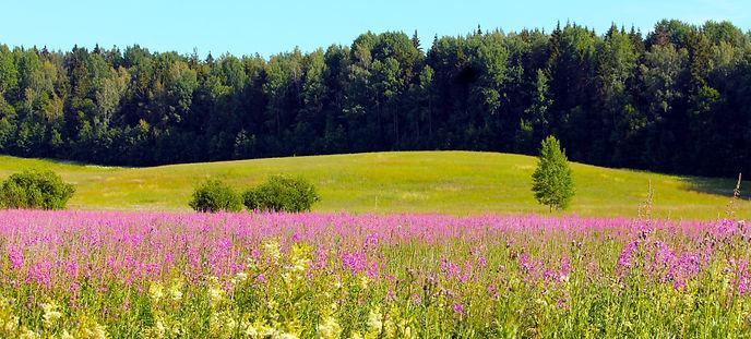 meadow 1.jpg