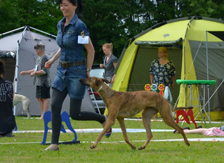 Sighthound show