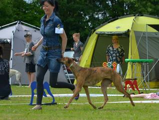Sighthound show