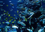 school-of-fish-in-water-3699434.jpg
