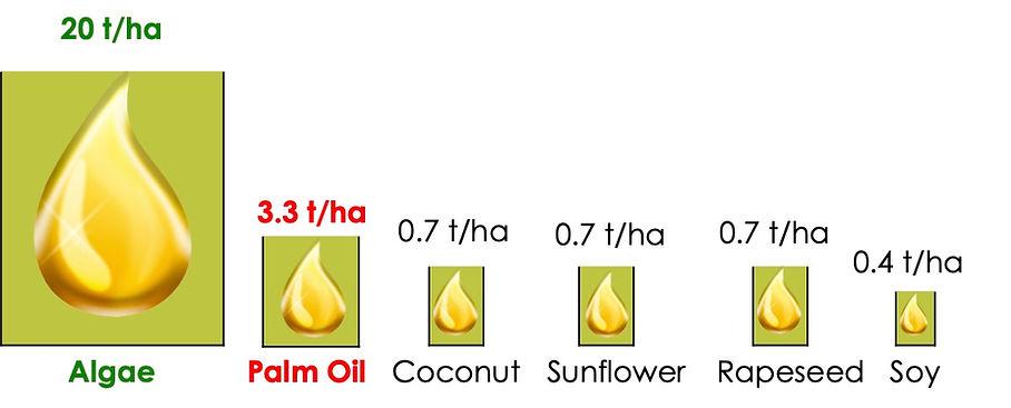 Oil producdtion chart.jpg