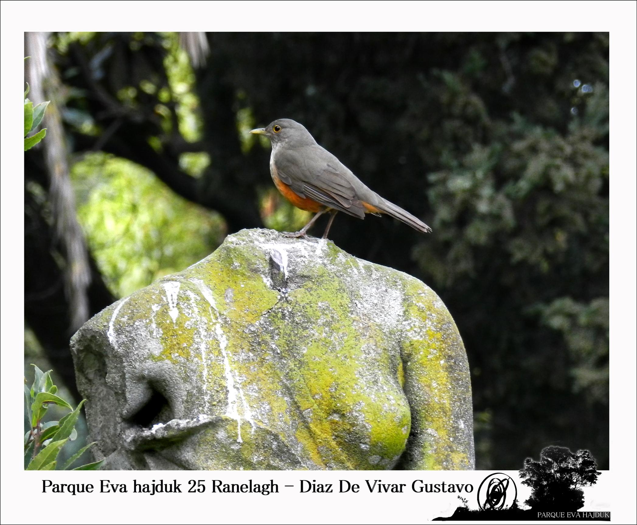 Parque Eva hajduk 25 Ranelagh - Diaz De Vivar Gustavo