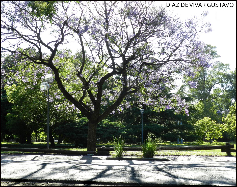 Ranelagh  2016 - Diaz De Vivar Gustavo