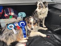 Ewelme Horse & Dog Show 2016