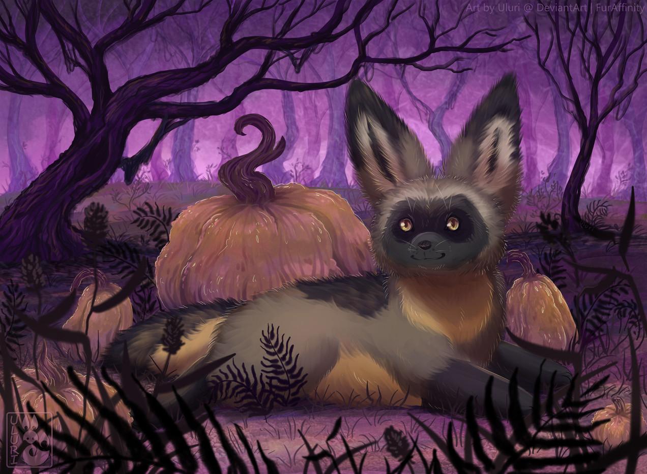 Bat-Eared Fox Uluri.jpg