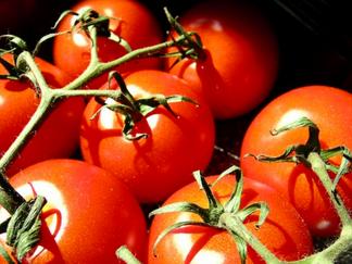 Ancrage territorial de l'alimentation : l'alimentation bio dans les cantines scolaires