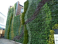 green wall at Edgware Rd tube station