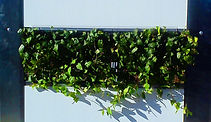 ivy living hoardings