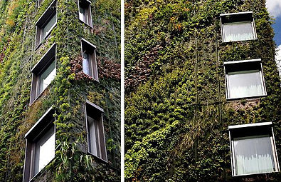 Patrick Blanc inspired hydroponic green wall