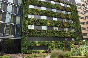 Green wall types - hydroponic modular living wall