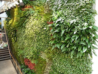 Feature green wall for aesthetics