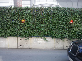 Ivy Screens in St. George's Street