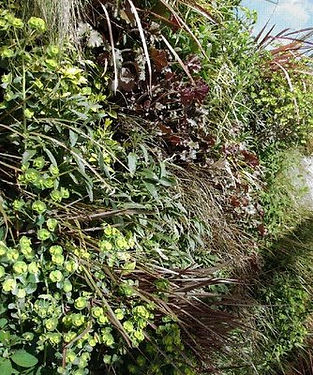 Installing a green wall for biodiversity