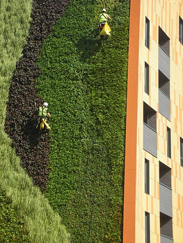 Ensuring safe access to green walls