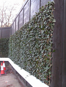 ivy screens after