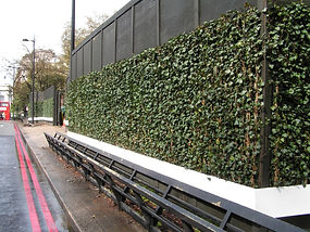 Ivy screens at Marble Arch, Hyde Park
