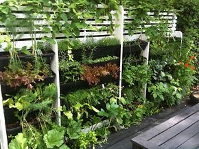 Vertical walls provide more space for urban food growing