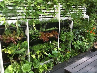 Growing food vertically in urban areas