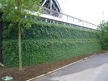 ivy screens installed in wallplanter
