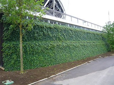 Evironmental sustainability the green wall way
