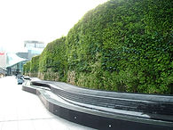 green wall at Westfield shopping centre, Shepherd's Bush