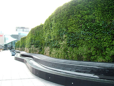 Green wall types - soil-based modular living wall