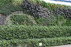 Green wall on construction hoarding, Library of Birmingham