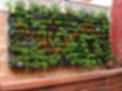 Urban farming the vertical way