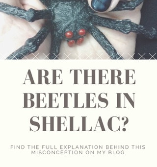 Are there Beetles in Shellac?