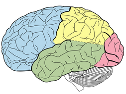 The Temporal Lobe's Role in Singing