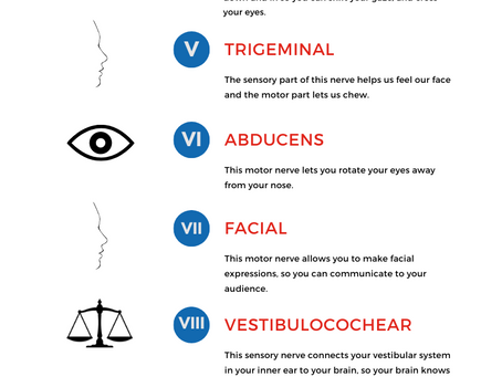 How the Cranial Nerves Work in Your Singing