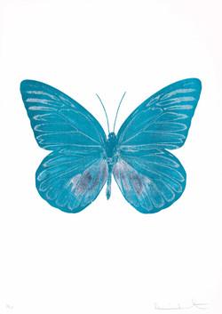 《藍蝴蝶|Blue Butterfly》