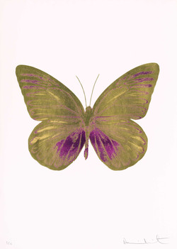 《金蝴蝶|Golden Butterfly》