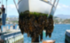 picture shows fouling by sea organisms on a ships hull
