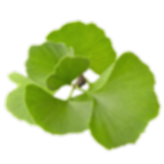 feuille ginkgo.png