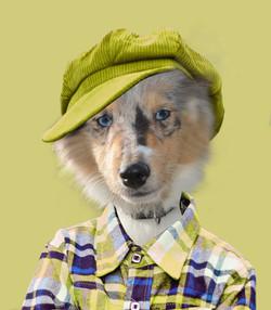 chien casquette verte