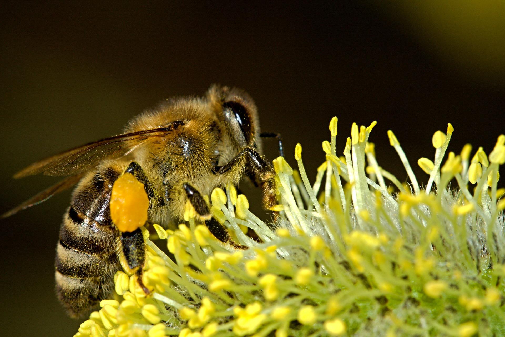forage - bees-18192_1920