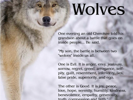 Which wolf will you feed in 2020 [and always and forever]?
