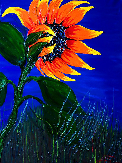 California Orange Sunflowers #8