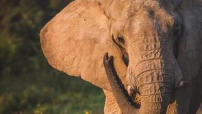 joehendricks-elephants-18.jpg