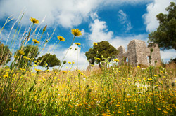 Ruins and Springflowers