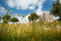Ruins and spring flowers