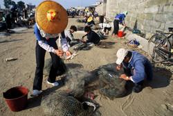 Hui'an Crab Nets