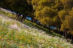 Kefalonian Spring