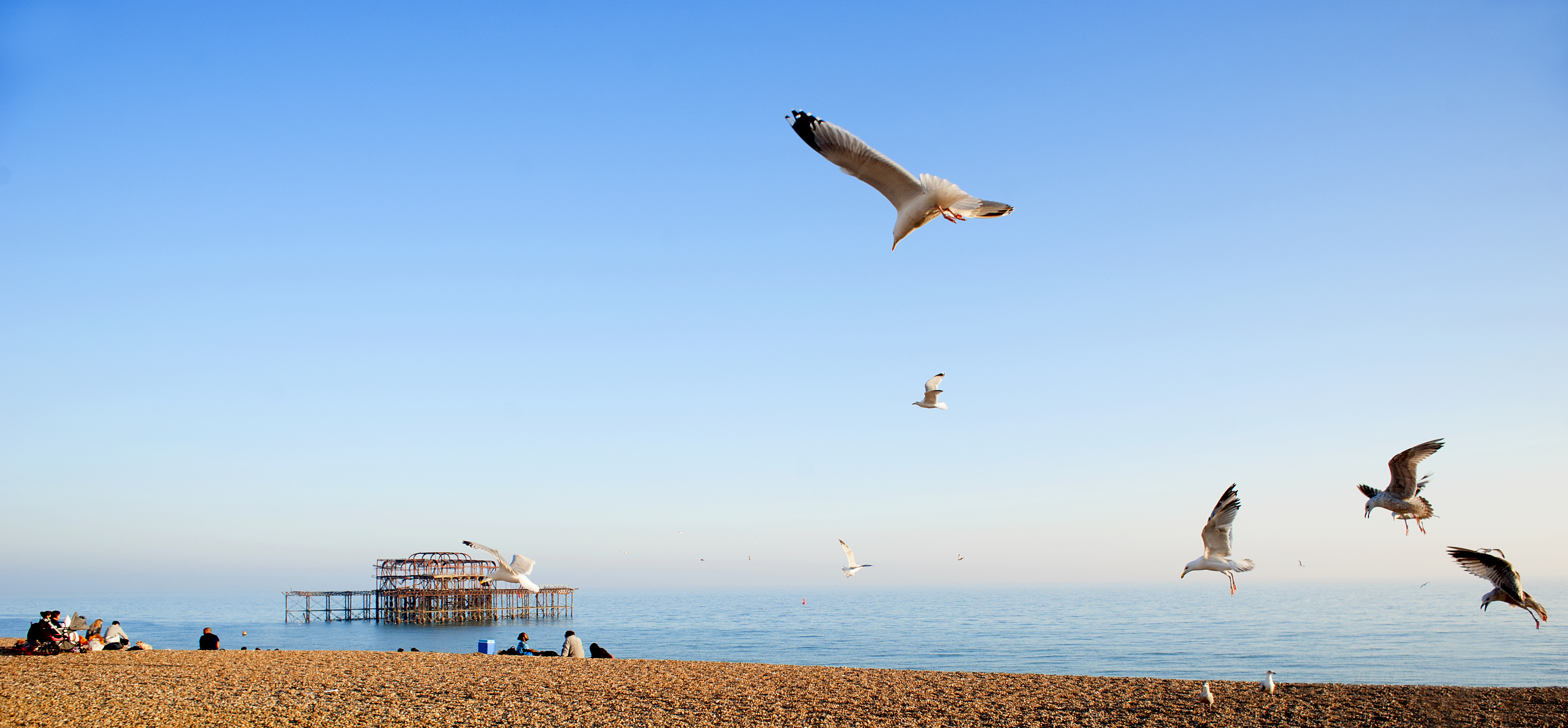 Brighton Seagulls panorama