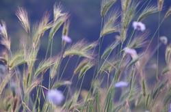 Kefalonia Flowers & Wheat Grass