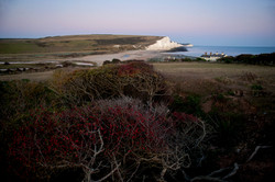 Red treeSeven Sisters
