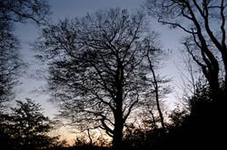 Autumn Trees Silhouette