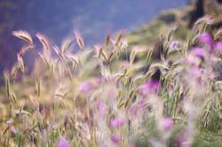 Springflowers Kefalonia